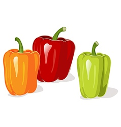 Colored pepper vector image