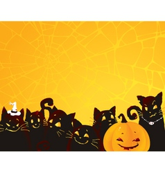 Halloween black cats and pumpkin vector image