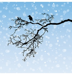 Raven on a branch vector image