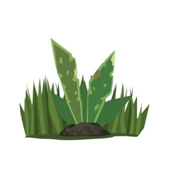 Tropical plant with big leaves jungle landscape vector
