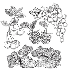 collection of berries vector image