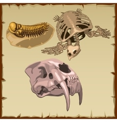 Set of fossil skeletons three different animals vector