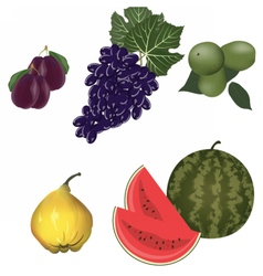 Autumn fruits set vector
