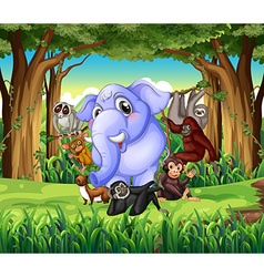 Wild animals in the jungle vector image