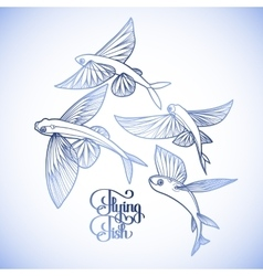 Graphic flying fish collection vector