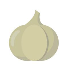 garlic vegetable diet nutrition vector image