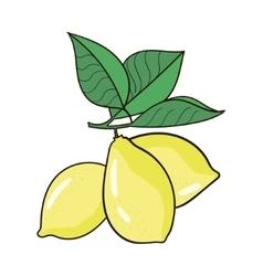 Lemon fruit vector
