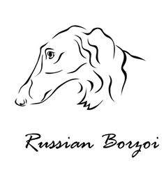 Russian borzoi vector