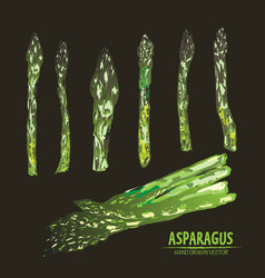 digital detailed line art color asparagus vector image vector image