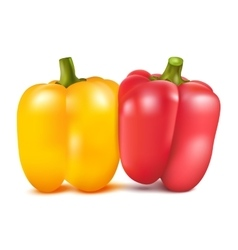 Yellow and red sweet pepper vector