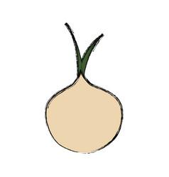 Delicious onion vegetable vector