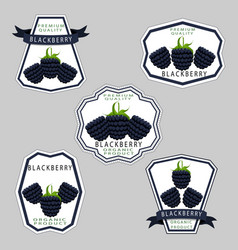 The theme blackberry vector