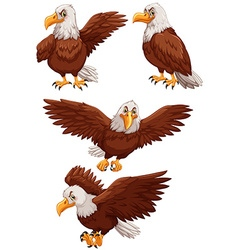 Four eagles in different actions vector