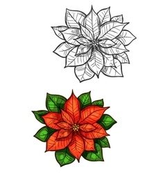 Christmas poinsettia star flower isolated sketch vector
