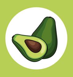 avocado healthy fresh image vector image