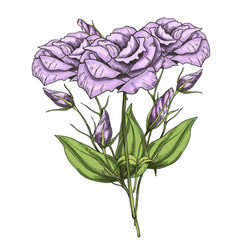 Hand drawn bouquet of eustoma flowers isolated on vector