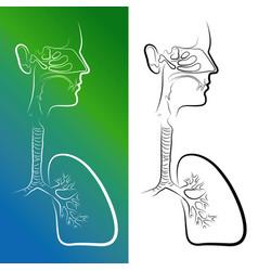 Sketch of respiratory system organs vector
