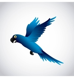 blue macaw design vector image