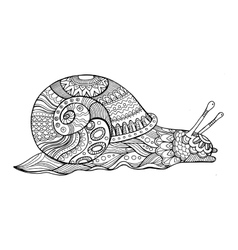 Snail coloring book for adults vector