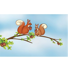 Squirrels vector