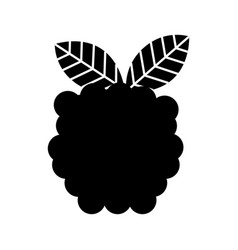 blackberry fresh fruit isolated icon vector image