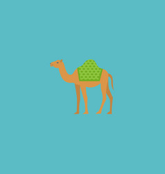 Flat icon camel element of vector