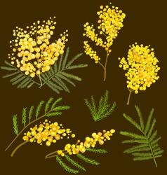 Mimosa hand drawn vector image vector image