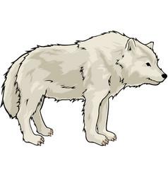 Cartoon white wolf vector