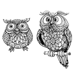Sketch of two owls vector