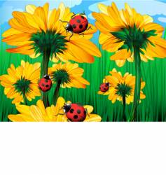 sunflowers and ladybugs vector image