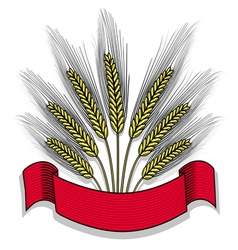 Isolated bunch of wheat with ribbon vector