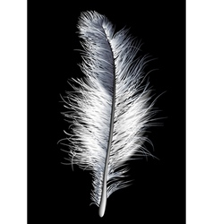 Feather white vector