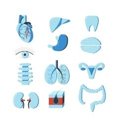 Set of human body organs anatomy design vector