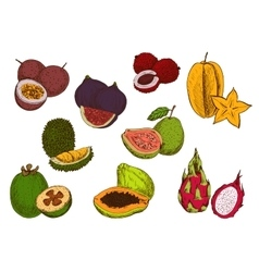 Fresh tropical fruits sketch icons vector