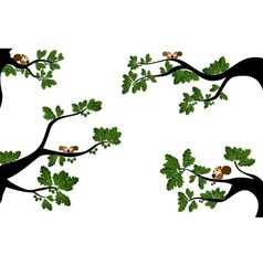 Branches with cute squirrel vector image vector image
