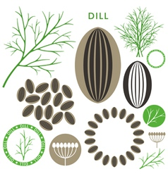 Dill vector image vector image