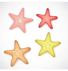 Starfishes on white background vector
