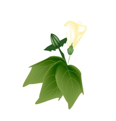 Yellow cotton flower with bud on a branch vector