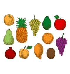 Sketch of fresh organic fruits vector