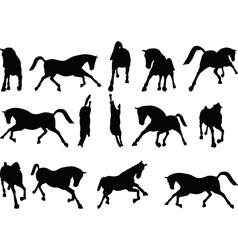 Horse silhouette in running pose vector