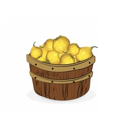 Quince fruits in a wooden basket vector