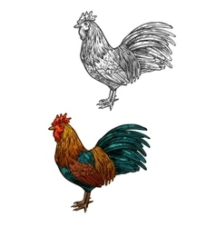 Rooster cock sketch icon for christmas vector