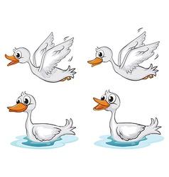 Four ducks vector image