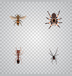 Realistic spinner tarantula wasp and other vector