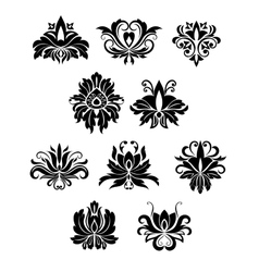Floral design elements and flowers vector image