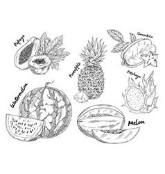 Sketched of watermelon and pitahaya fruits vector