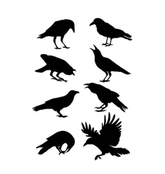 Black crow silhouettes vector