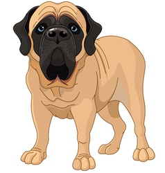 english mastiff vector image vector image