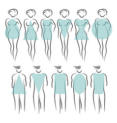 Types of female figure vector