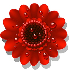 Red gerbera vector